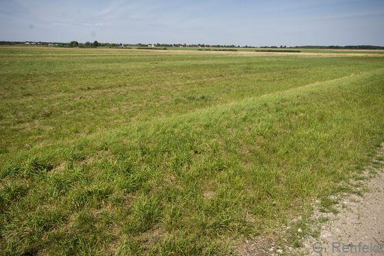 Intensivgrünland trockener Mineralböden (GIT), Vechelde