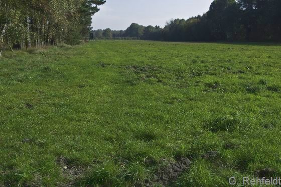 Intensivgrünland auf Moorböden (GIM), Ehra